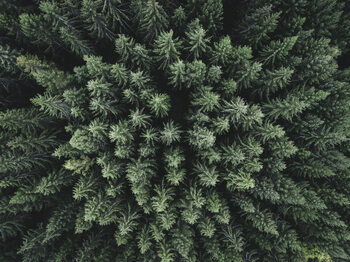 Arte Fotográfica Moody forest from above
