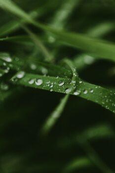 Art Photography Mystical grass
