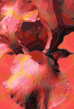 Fine Art Print Orange Iris