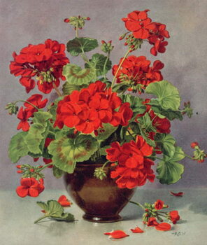 Fine Art Print PB/273 Geranium in an Earthenware Vase
