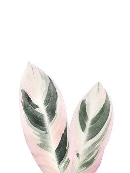 Illustration Pink Tropical Leaf