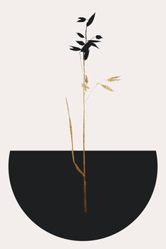 Illustration Planta Negra
