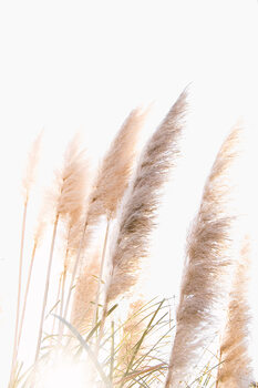 Art Photography Reed 1