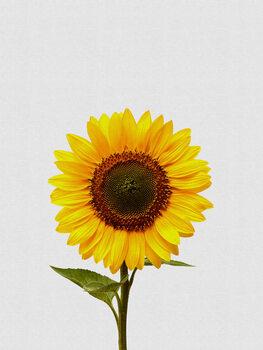 Illustration Sunflower Still Life