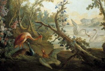 Fine Art Print Swans and peacocks