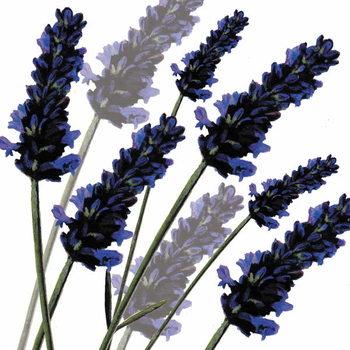 Taidejuliste Sweet Lavender, 2004