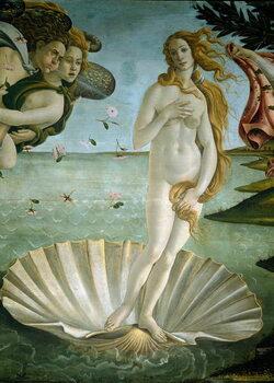 Reprodução do quadro The birth of Venus (detail), 1484