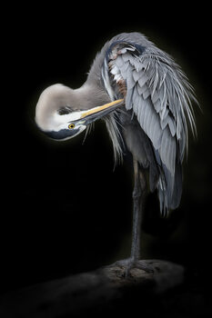 Art Photography The Great Blue Heron