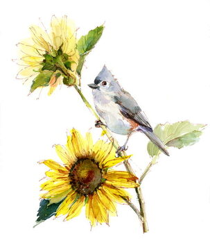 Fine Art Print Titmouse with Sunflower, 2016,