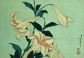Fine Art Print Trumpet Lilies