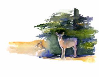Fine Art Print Two Deer, 2014,