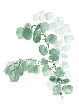 Illustration Watercolor silver dollar eucalyptus