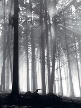 Impressão artística Forest Dawn