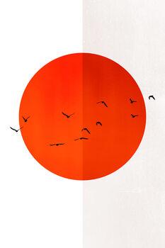 Ilustração 13 Seagulls In The Sun