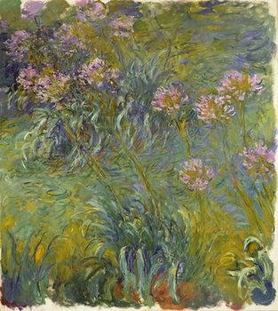 Reprodução do quadro Agapanthus, 1914-26