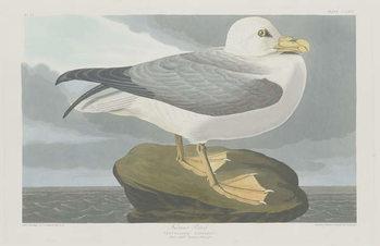 Reprodução do quadro Fulmer Petrel, 1835