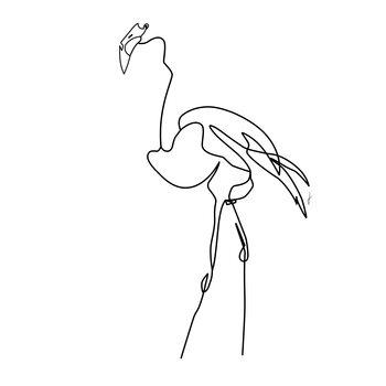 Ilustração Fuoco