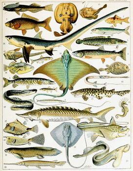 Reprodução do quadro Illustration of  Fish  c.1923