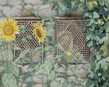 Reprodução do quadro Jesus Looking through a Lattice with Sunflowers, illustration for 'The Life of Christ', c.1886-96