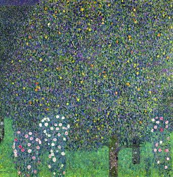 Reprodução do quadro Roses under the Trees, c.1905