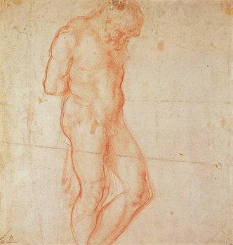 Reprodução do quadro Study of a Nude