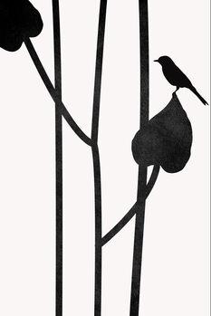 Ilustração The Bird