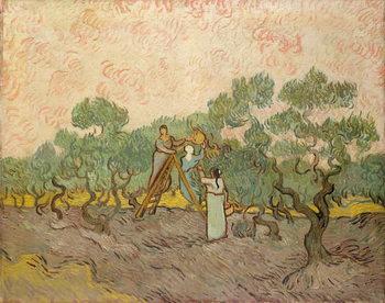 Reprodução do quadro The Olive Pickers, Saint-Remy, 1889
