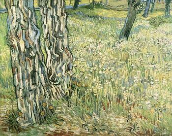 Reprodução do quadro Tree trunks in grass, 1890, by Vincent van Gogh