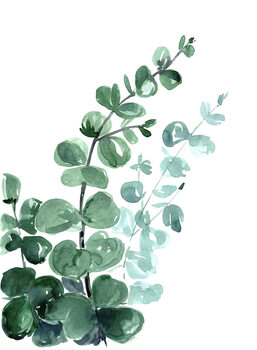Ilustração Watercolor eucalyptus bouquet