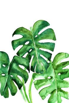 Ilustração Watercolor monstera leaves