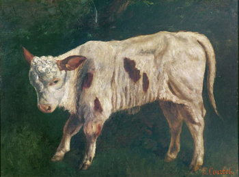 Reprodução do quadro  A Calf