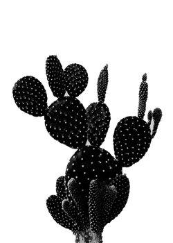 Ilustração BLACKCACTUS1