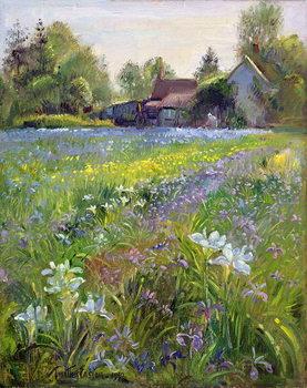 Reprodução do quadro  Dwarf Irises and Cottage, 1993