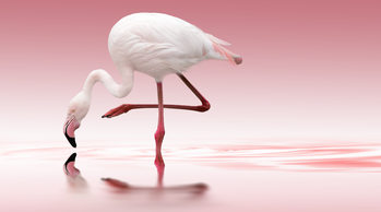 Arte Fotográfica Exclusiva Flamingo