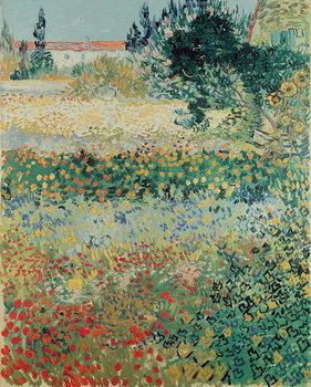 Reprodução do quadro  Garden in Bloom, Arles, July 1888
