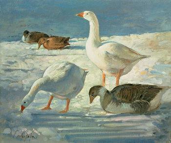 Reprodução do quadro  Geese and Mallards, 2000