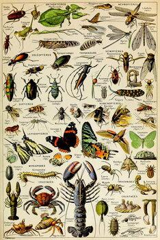 Reprodução do quadro Illustration of  various Invertebrates  c.1923