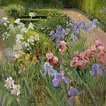 Reprodução do quadro Irises at Bedfield