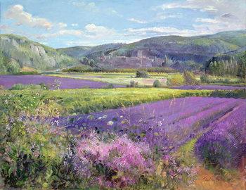 Reprodução do quadro  Lavender Fields in Old Provence