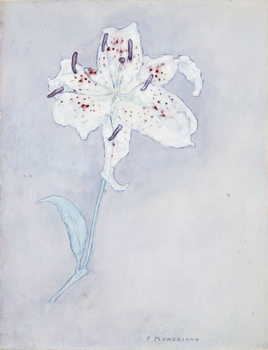 Reprodução do quadro Lily, c.1920-25