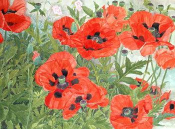 Reprodução do quadro  Poppies
