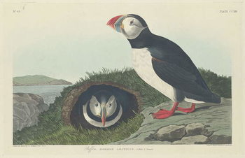 Reprodução do quadro Puffin, 1834