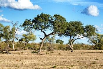 Arte Fotográfica Exclusiva Savannah Landscape