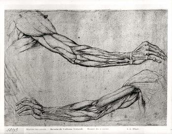 Reprodução do quadro Study of Arms