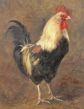 Reprodução do quadro  The Cockerel, 1999