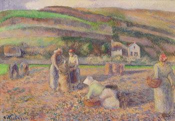 Reprodução do quadro  The Potato Harvest, 1886