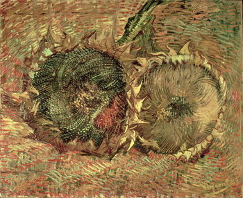 Reprodução do quadro  Two Cut Sunflowers, 1887