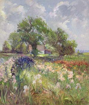 Reprodução do quadro White Barn and Iris Field, 1992