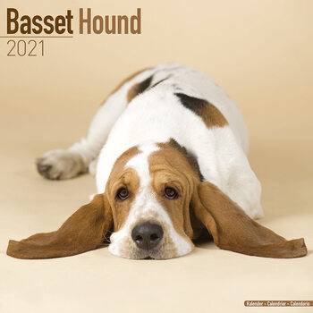 Calendar 2021 Basset Hound