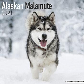 Calendar 2021 Alaskan Malamute